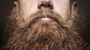 beardvittop