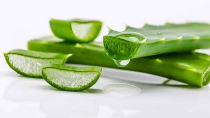 aloe vera gel before or after moisturizer
