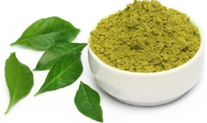 henna plant to dye beard black